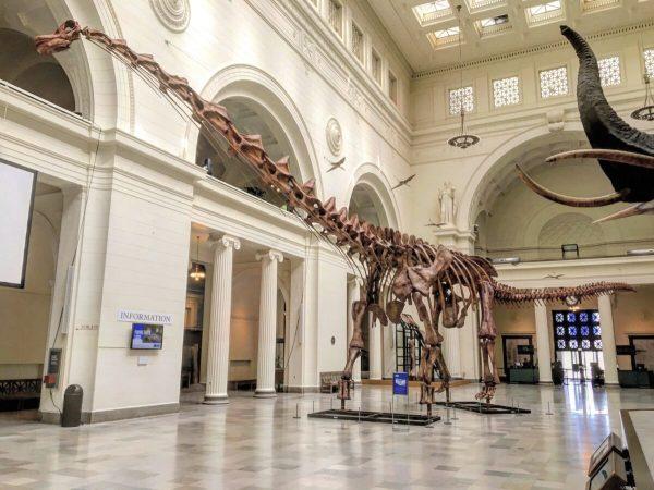 Esqueleto de titanossauro fundido em exposição no Field Museum of Natural History em Chicago, Illinois. ( Zissoudisctrucker / CC BY-SA 4.0)