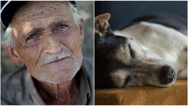 Vovô que vive em extrema pobreza resgata cão paraplégico e o hospeda em sua humilde casa