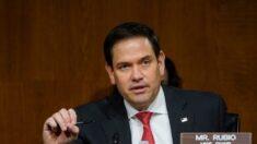 Trump apoia senador da Flórida, Marco Rubio