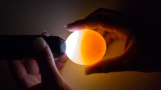 Revista chinesa publica relatórios de que ovos cozidos podem regenerar; internautas questionam a legitimidade