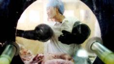 Cientistas chineses produzem porcos geneticamente modificados para transplante humano
