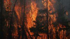 Centenas de incêndios no Canadá forçam a evacuação de milhares de pessoas
