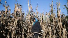 Diante da escassez de alimentos, China investiga altos funcionários