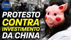 Investimento da China em suínos na Argentina gera críticas