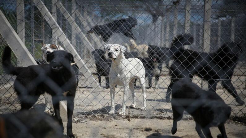 Austrália: cães resgatados são assassinados para evitar violação do lockdown