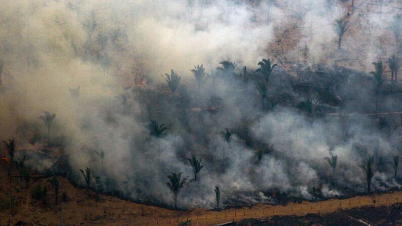 Partido Comunista Chinês é financiador do desmatamento no mundo