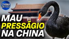 Um cisne negro apareceu na Praça Tiananmen, no centro de Pequim