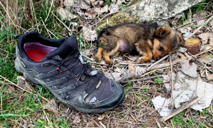 Homem encontra cachorrinho abandonado sobrevivendo em sapato e depois de sua compaixão, ambos foram presenteados