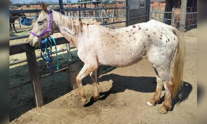 Equipes de resgate salvam égua cega à beira da morte na Califórnia