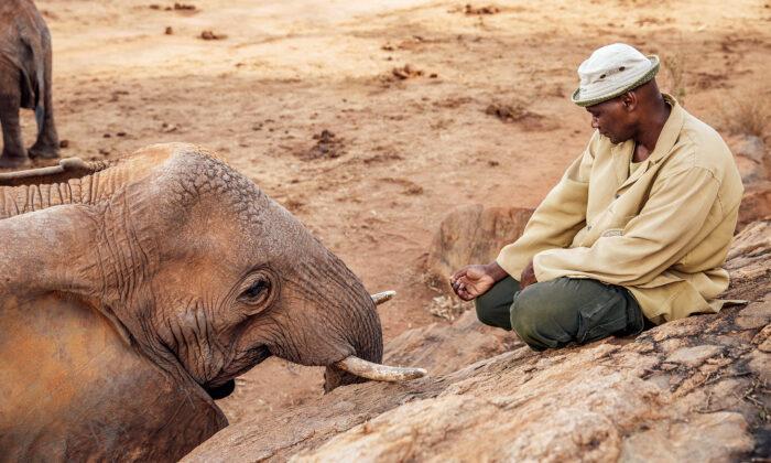 Mãe elefante leva seu bebê para visitar homem que a criou há 10 anos