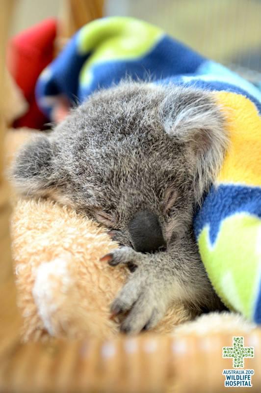Cortesia do zoológico da Austrália