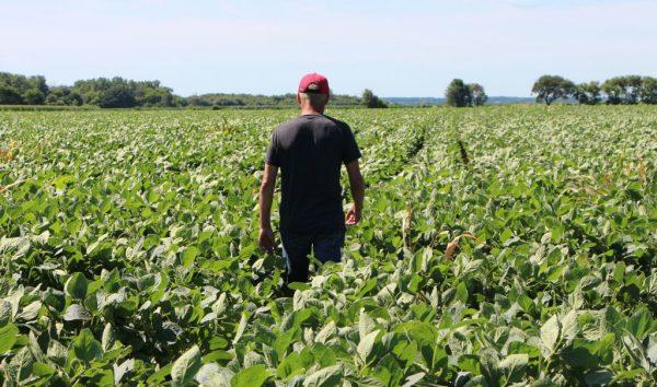 Um agricultor percorre seus campos de soja em Harvard, Illinois, em 6 de julho de 2018 (NOVA SAFO / AFP / Getty Images)