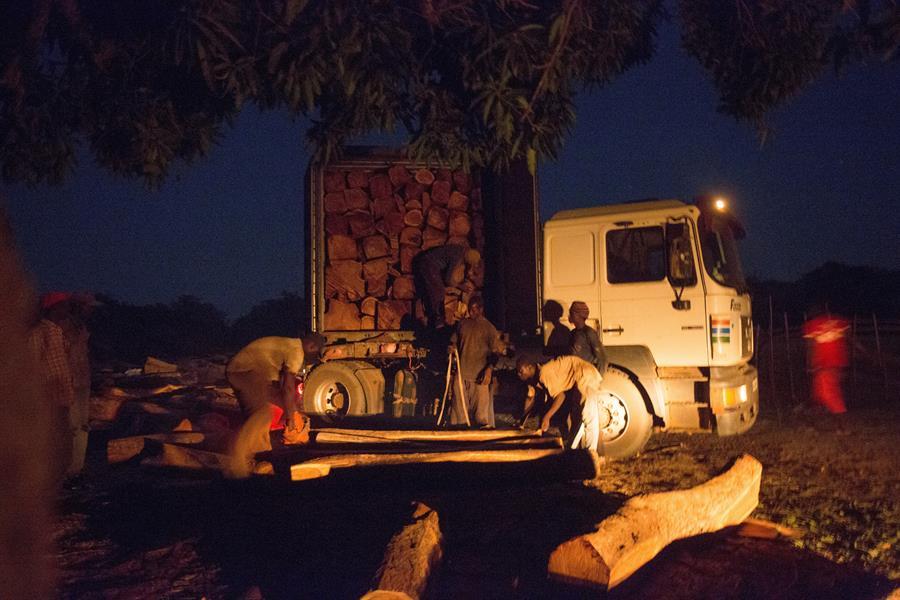 Móveis de luxo são vendidos em lojas de varejo em toda a China, feitos de madeira marrom-avermelhada escura que imita o estilo antigo. Sua demanda começou a crescer no início dos anos 2000, com a ascensão da classe média no país asiático, e incentivou a extração ilegal de florestas na África (EFE)