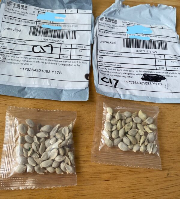 Dois pacotes contendo sementes chinesas desconhecidas (Departamento de Agricultura do Estado de Washington)