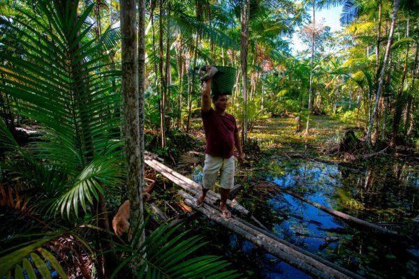 Manoel Moreira, 40 anos, carrega uma cesta cheia de frutas para vender aos comerciantes enquanto caminha pela floresta tropical perto de Melgaco, a sudoeste da ilha de Marajó, estado do Pará, Brasil, em 6 de junho de 2020 (Foto de TARSO SARRAF / AFP via Getty Images)