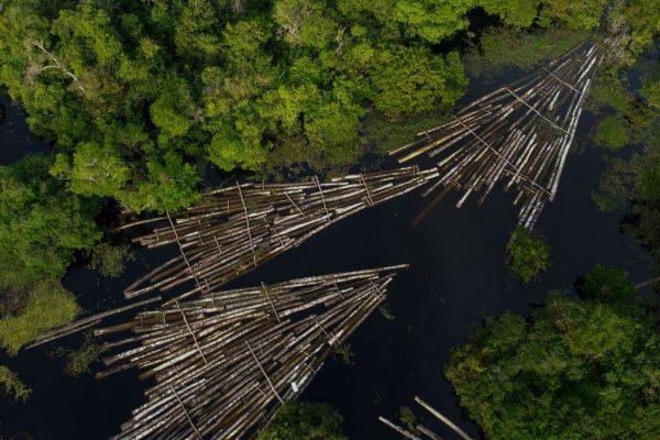 Vista aérea de toras de madeira apreendidas pela Polícia Militar da Amazônia no rio Manacapuru, em Manacupuru, Estado do Amazonas, Brasil, em 16 de julho de 2020 (Foto por RICARDO OLIVEIRA / AFP via Getty Images)