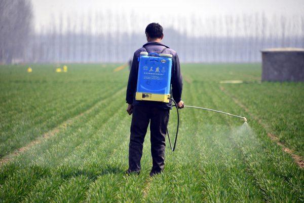 Um fazendeiro chinês pulveriza pesticida em um campo de trigo no condado de Liaocheng, província de Shandong, leste da China, no condado de Chiping em 15 de março de 2017 (STR / AFP / Getty Images)