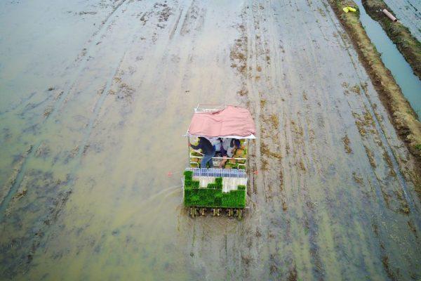 Esta foto tirada em 5 de junho de 2017 mostra agricultores se preparando para plantar arroz em um arrozal em Nantong, província de Jiangsu, leste da China (STR / AFP via Getty Images)