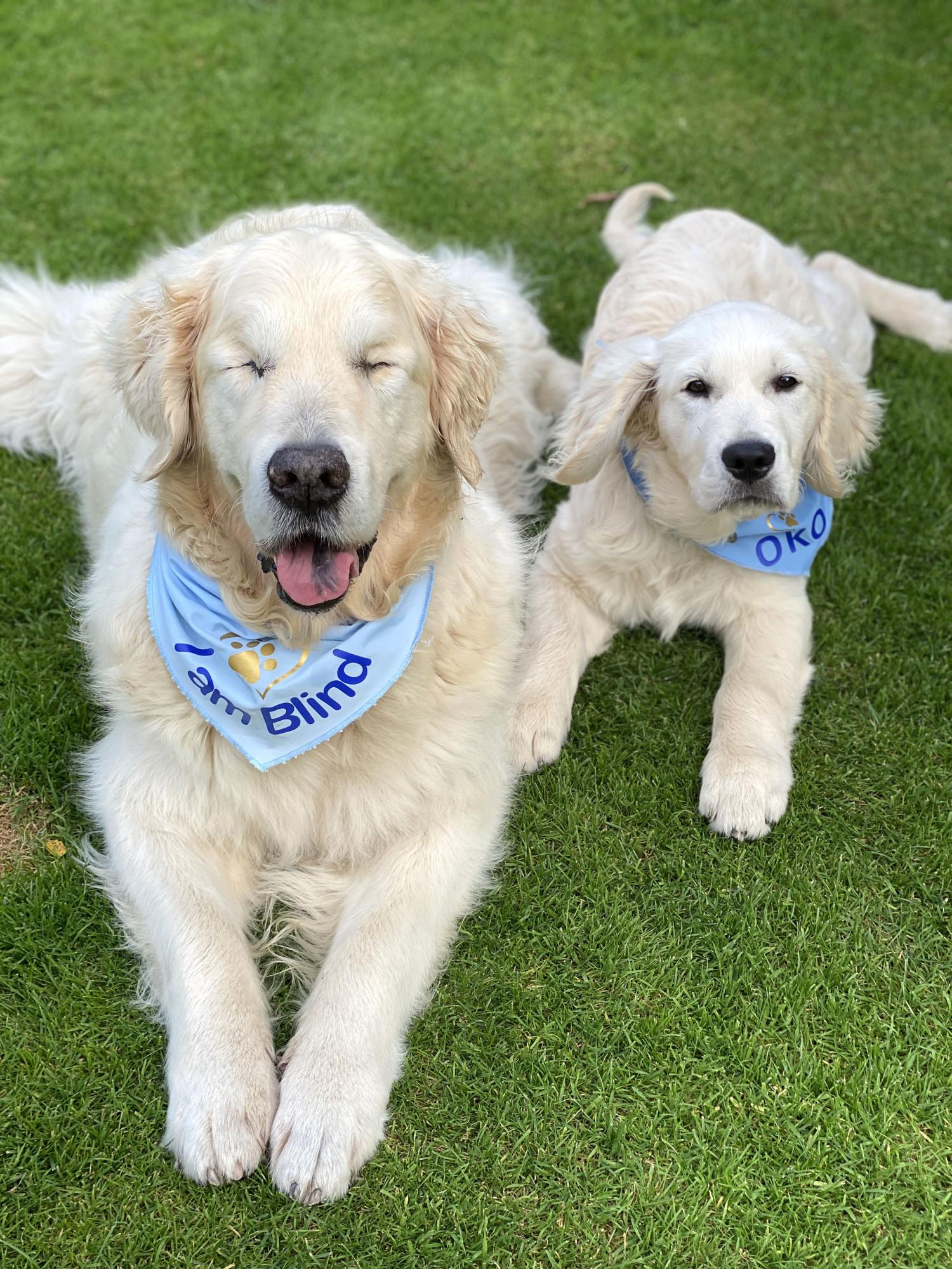 O adorável Tao com seu lindo cão-guia, Oko (Caters News)