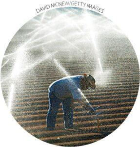 Uma fazenda em El Centro, Califórnia, irriga com água do rio Colorado.  Os 17 estados ocidentais respondem por cerca de 75% dos acres irrigados do país e quase 83% das retiradas de irrigação.