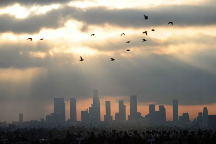Os pássaros voam ao amanhecer sobre o centro de Los Angeles (Frederic J. Brown / AFP / Getty Images)