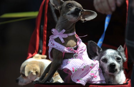 Site serve como classificados virtual de babás de cachorro (Getty Images)